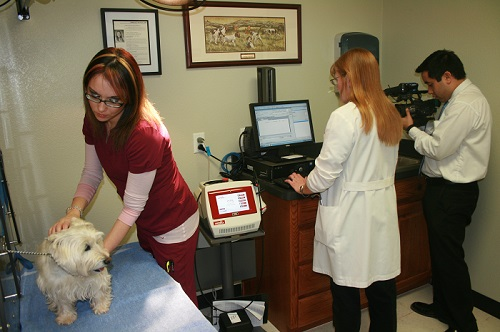 Cold Laser Therapy at Windmill Animal Hospital