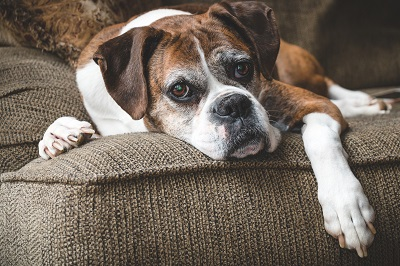 7 Tips for Giving Your Senior Dog the Best Possible Care