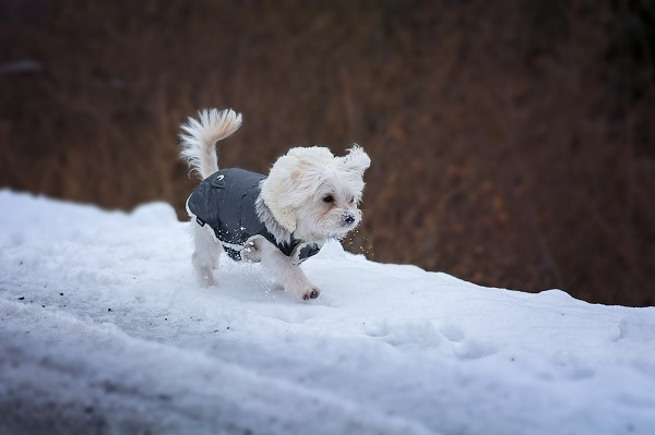 5 of the Best Health and Winter Weather Safety Tips for Your Pet